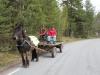 Anita och Gunilla kör hästen