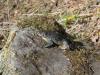 En groda hittades och djurvänner som alla är sparades en boplats åt den