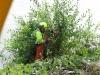 Tar bort stubbar och buskötter