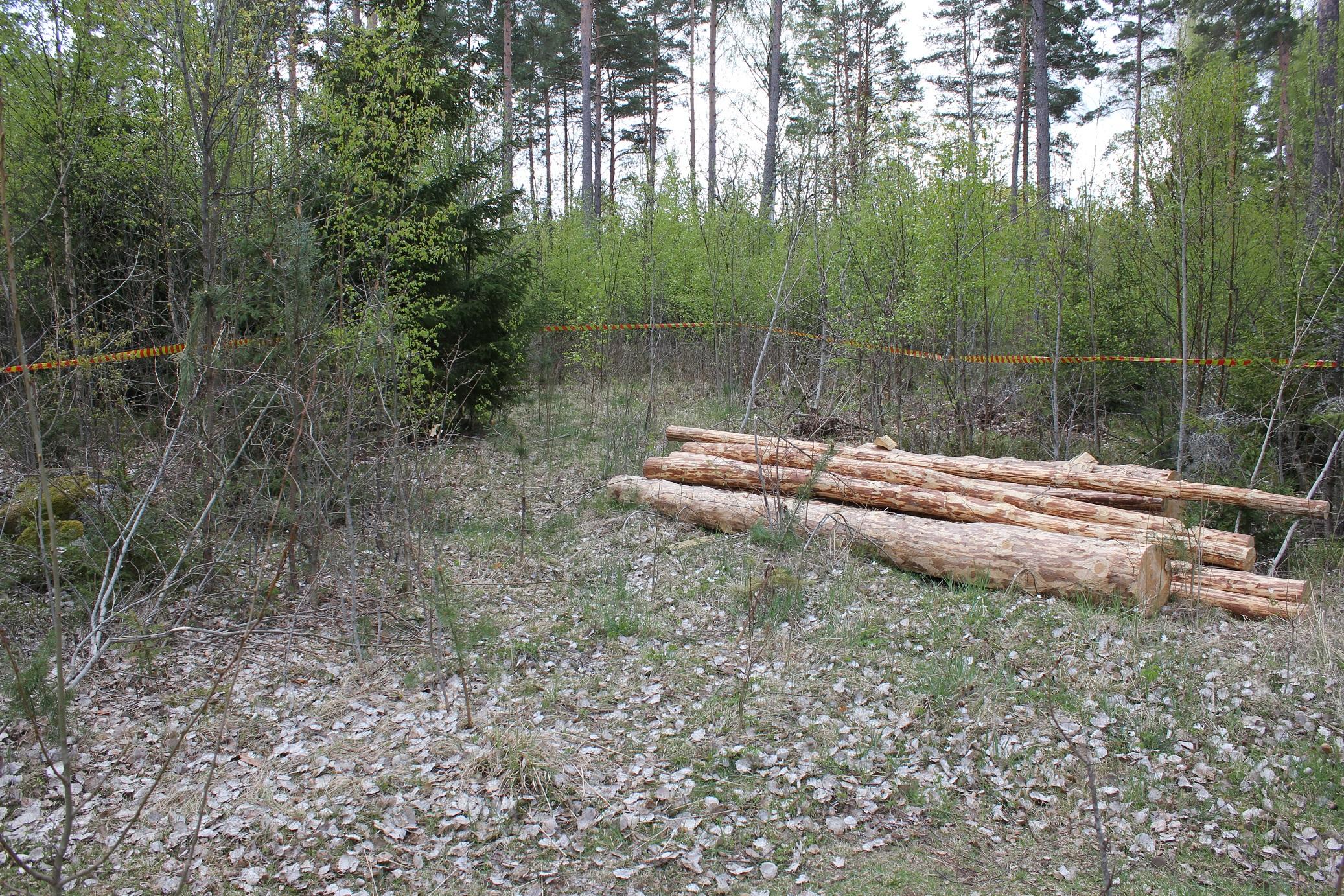 2019-04-25 Matreal i skogen4